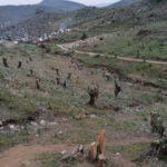 "Lesbos: ""Dankbare"" Migranten zerstören über 5.000 (!) Olivenbäume"