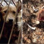 Lampedusa: Migranten stahlen einer Bäuerin Hühner, Ziegen und Hundewelpen; bloß die Schweine rührten sie nicht an