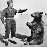 Wojtek, das Maskottchen der polnischen Armee