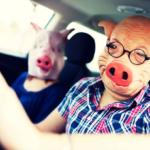 """Keine """"Verschwörungstheorie"""": Nach Maskenzwang kommt Sonnenbrillen- und Mützenverbot im Auto!"""