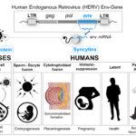 Studie: Unfruchtbarkeitsrisiken bei Covid-Impfstoffen?